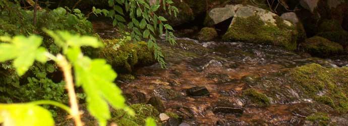 Hiking Trails in Idaho