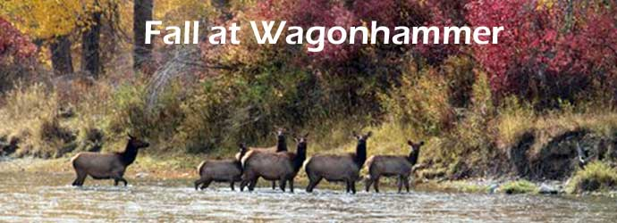 Elk Run at Wagonhammer, Fall Season