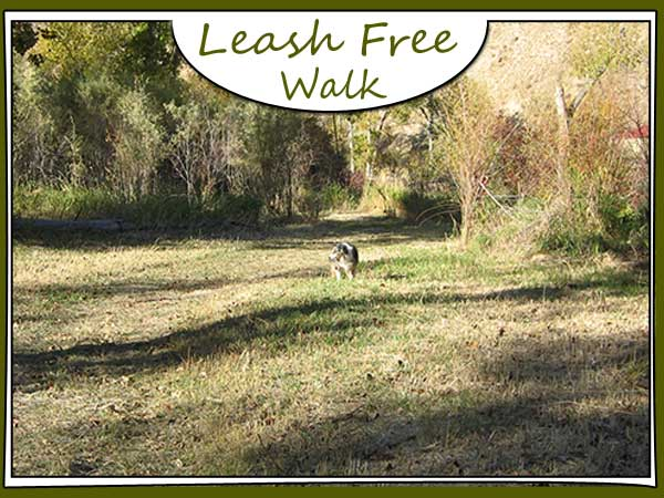 Leash Free Dog Walk Area