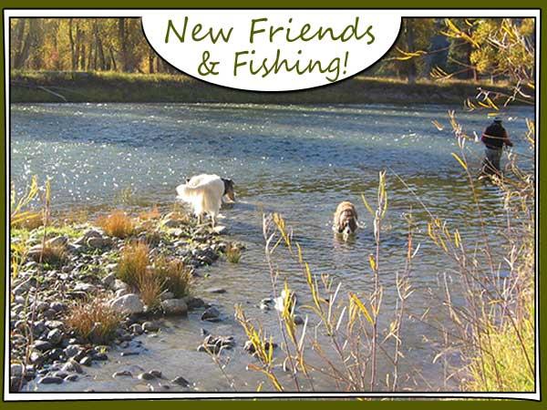 Dog and fisherman