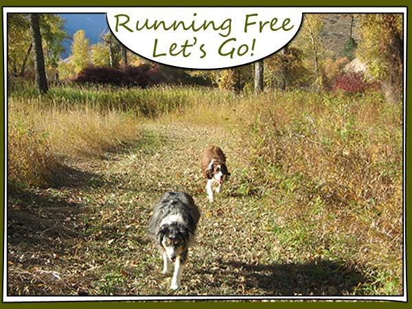 Dog Leading the Way
