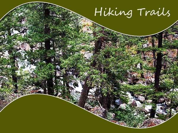 Iaho hiking trails