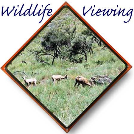 Idaho Wildlife viewing